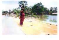 secando-arroz.jpg